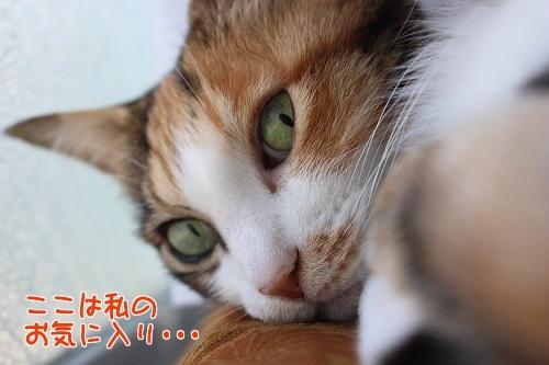 IMG_0470編集②-1.jpg