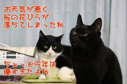 IMG_0471編集②.jpg