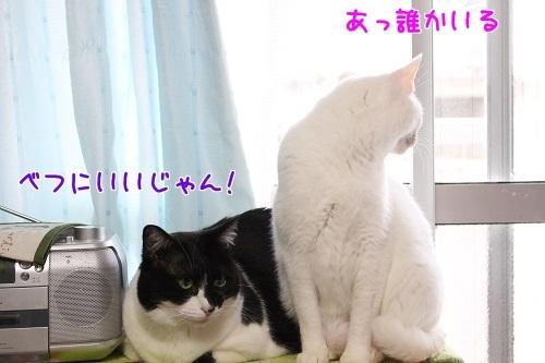 IMG_0533編集②.jpg
