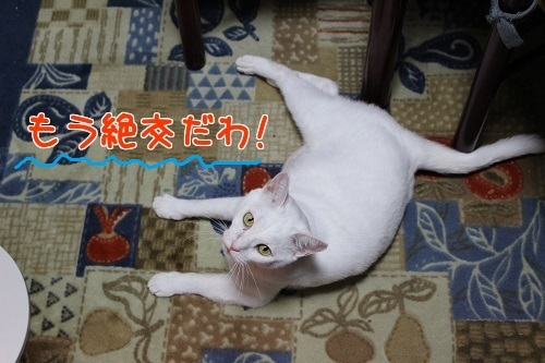 IMG_0733編集②-1.jpg