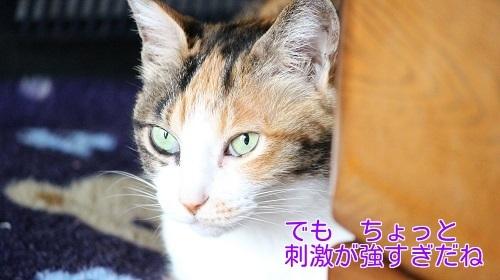 IMG_0774編集②.jpg