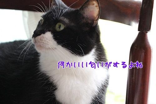 IMG_1435編集②.jpg