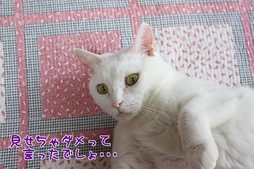 IMG_1645編集②.jpg