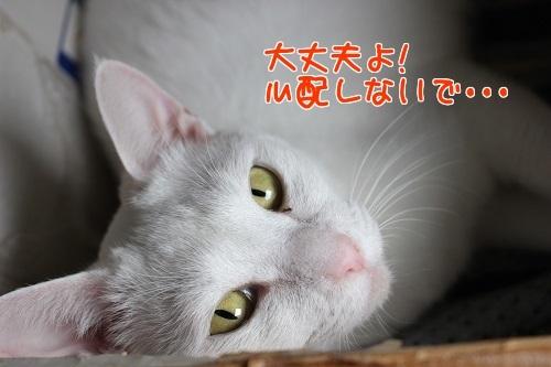 IMG_2046編集②.jpg