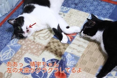 IMG_3307編集②.jpg