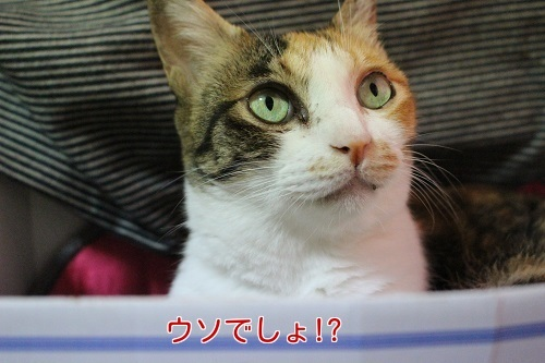 IMG_4561編集②.jpg