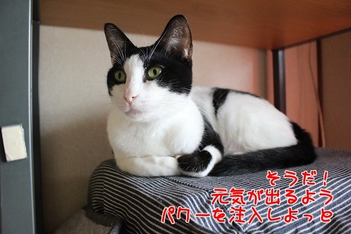 IMG_4620編集②.jpg