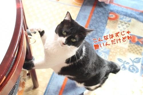 IMG_4847編集②.jpg