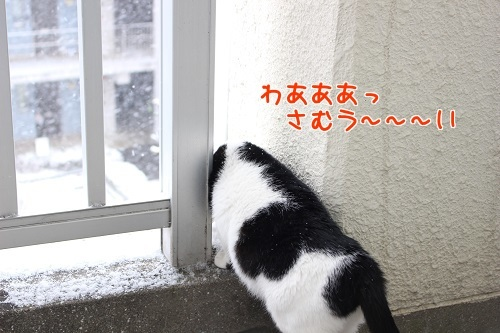 IMG_4906編集②.jpg