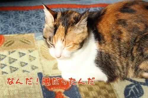 IMG_5060編集②.jpg