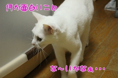 IMG_5607編集②.jpg