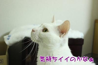 IMG_6053編集②.jpg