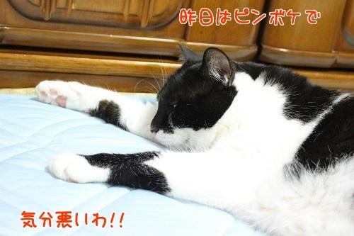 IMG_6101編集②.jpg