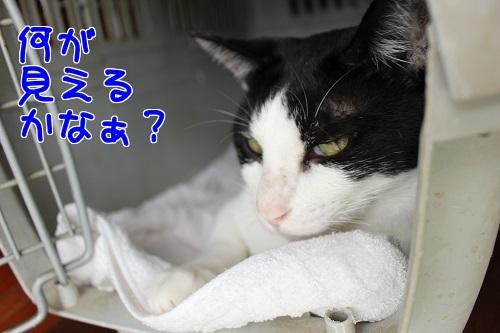 IMG_6154編集②.jpg