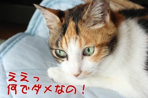 IMG_6158編集②.jpg