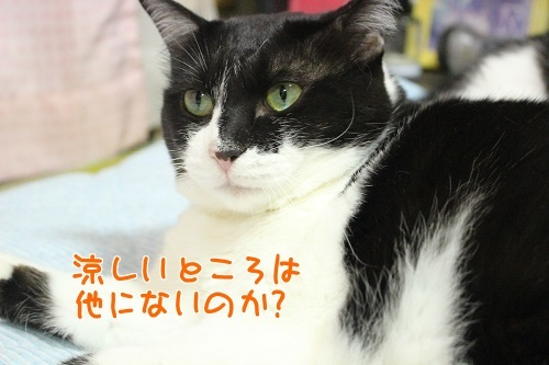 IMG_6487編集②.jpg