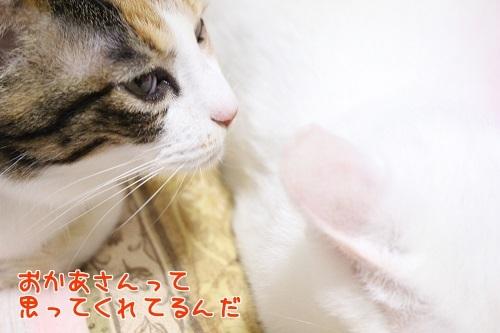 IMG_6509編集②.jpg