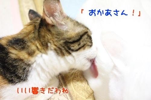 IMG_6512編集②.jpg