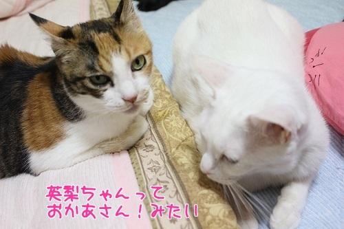 IMG_6521編集②.jpg