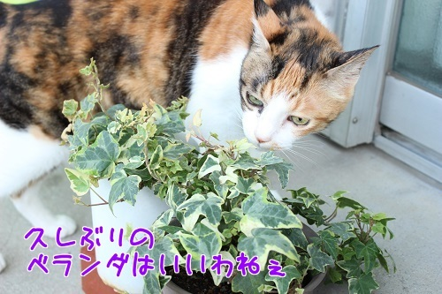 IMG_6619編集②.jpg