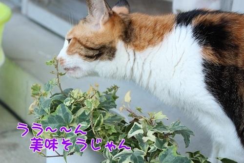 IMG_6629編集②.jpg