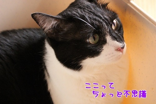 IMG_7092編集②.jpg