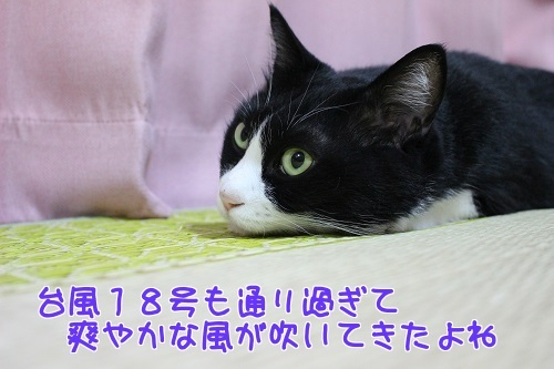 IMG_8090編集②.jpg