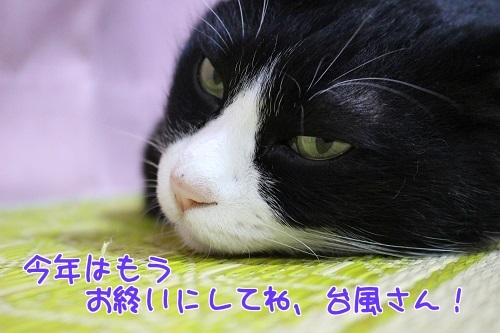 IMG_8096編集②.jpg