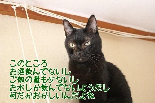 IMG_8297編集②.jpg
