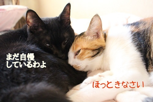 IMG_8529編集②.jpg