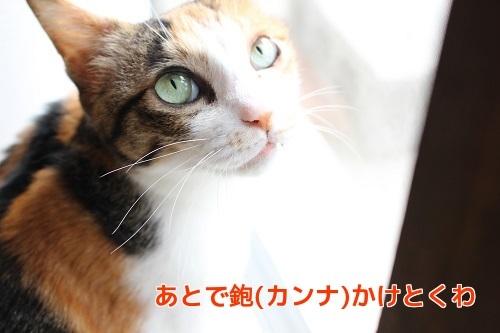 IMG_8553編集②.jpg