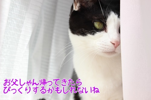 IMG_8780編集②.jpg