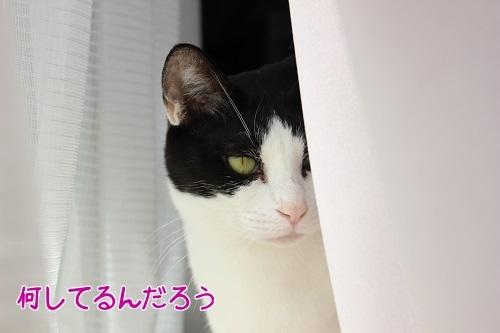 IMG_8791編集②.jpg