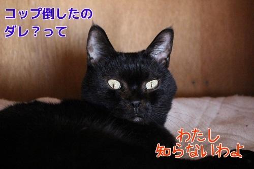 IMG_8808編集②.jpg