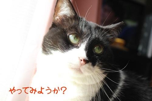 IMG_9022編集②.jpg