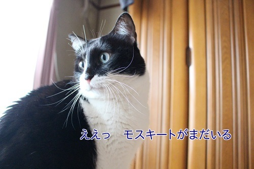IMG_9487編集②.jpg