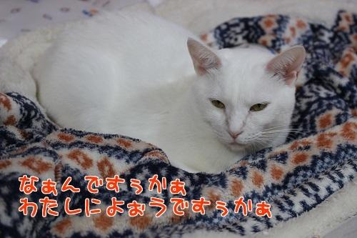 IMG_9906編集②.jpg