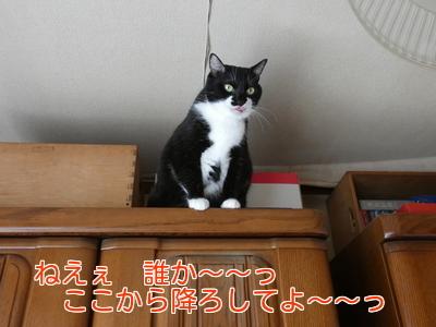 P1030380編集②.jpg