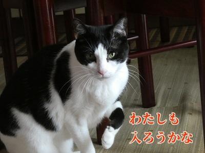 P1050260編集②.jpg