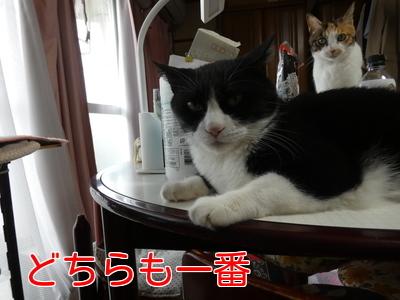 P1060018編集②.jpg
