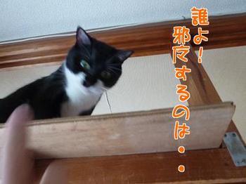 P1170550編集②.jpg