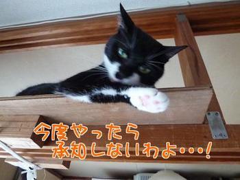 P1170559編集②.jpg