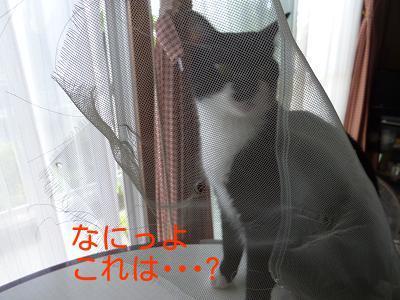 P1260585編集②.jpg