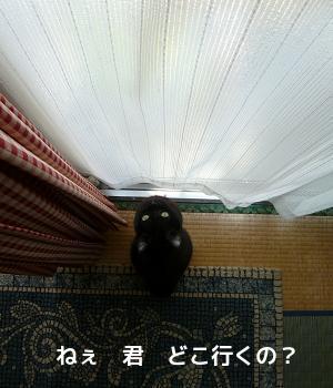 P1270067編集②.jpg