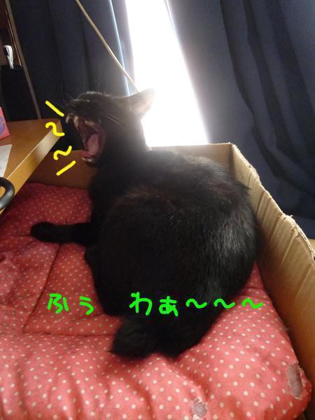 P1270104編集②-1.jpg