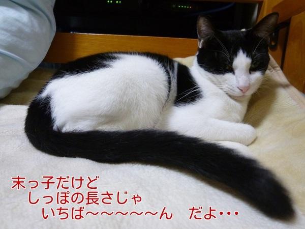 P1300656編集②.jpg