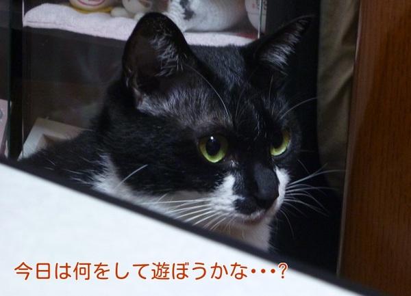 P1300695編集②.jpg
