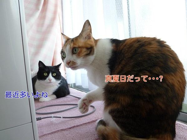 P1320057編集②.jpg