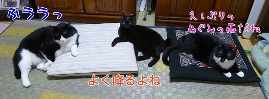 P1320132編集②.jpg