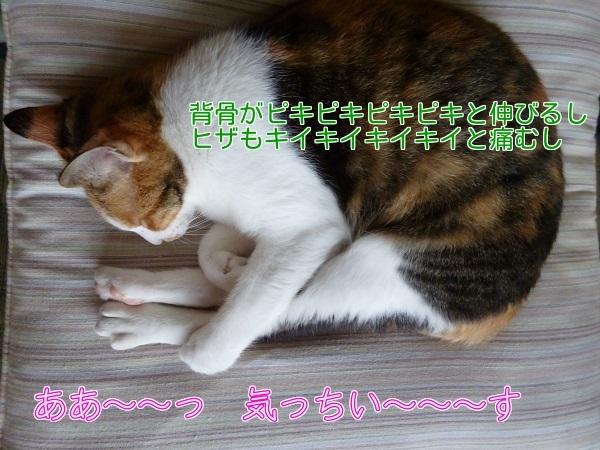 P1320235編集②.jpg